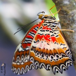 2017.02.20 Butterfly Rainforest Butterfly 4 CR