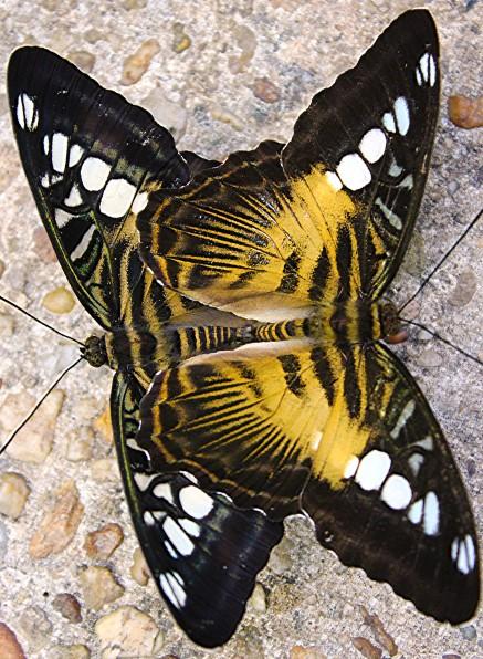 2017.02.20 Butterfly Rainforest Making Caterpillars 1