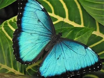 2017.06.03 Butterfly Rainforest Butterfly 4