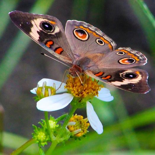 Fluttering By