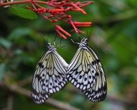 2017.09.16 Butterfly Rainforest Butterfly 14