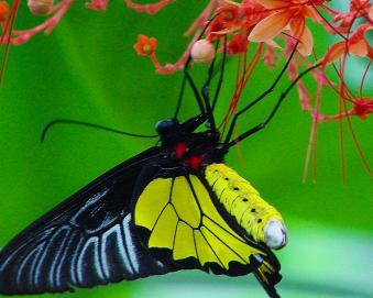 2017.09.16 Butterfly Rainforest Butterfly 15