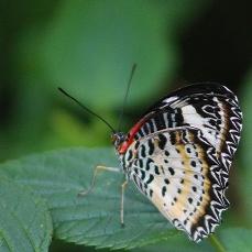 2017.09.16 Butterfly Rainforest Butterfly 2