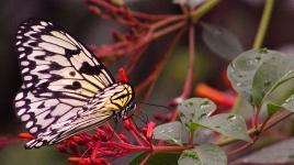 2017.09.30 Butterfly Rainforest Butterfly 2