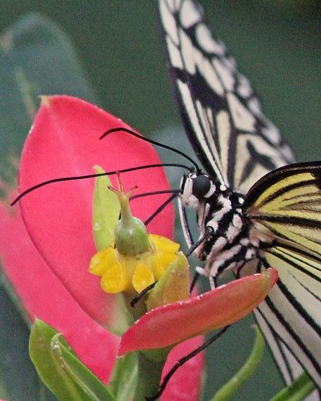 2017.09.30 Butterfly Rainforest Butterfly 4