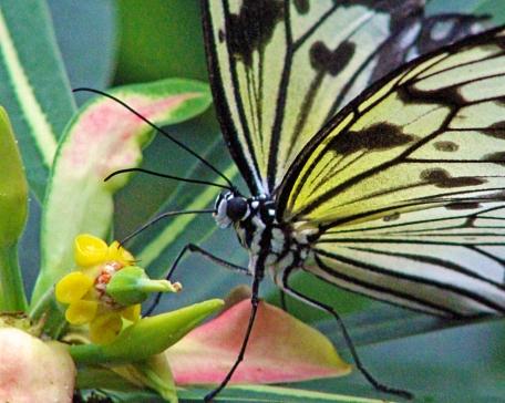 2017.11.05 Butterfly Rainforest Butterfly 1