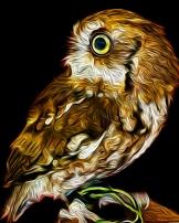 2019.03.09 Sunrise Wildlife at WBU Eastern Screech Owl Ruby 3 art alt