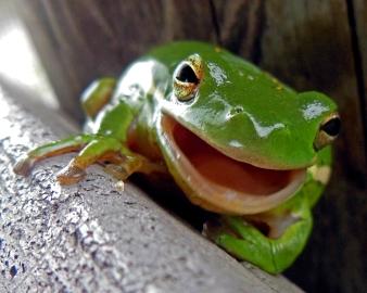 2015.05.25.La Chua Trail Frog 5