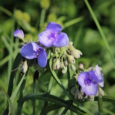 2017.09.08 La Chua Trail Flower 1