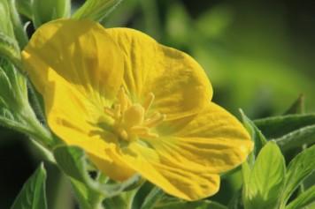 2017.09.09 Prairie 441 Overlook Flower 1