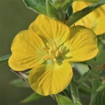 2017.09.09 Prairie 441 Overlook Flower 2