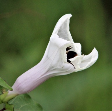 2017.09.09 The Hood Flower 2