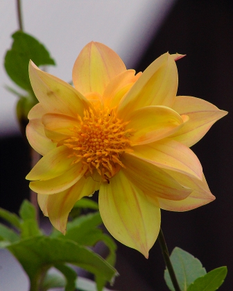 2017.10.28 Dudley Farm Flower