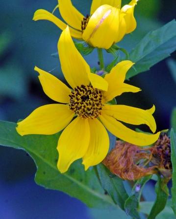 2017.12.09 La Chua Trail Flower 1