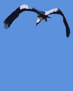2017.12.25 La Chua Trail Wood Stork Art 2