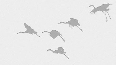 2018.01.06 Beef Teaching Unit Sandhill Cranes 18.cropped.art2