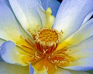 2018.06.20 Sweetwater Wetlands Lotus 2 Art.