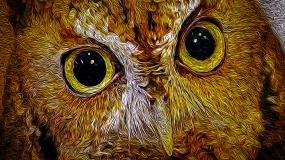 2019.03.09 Sunrise Wildlife at WBU Eastern Screech Owl Ruby 9 art cropped