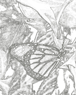 DC2.ButterflyMNH.charcoal