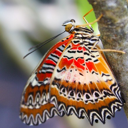 2017.02.20 Butterfly Rainforest Butterfly 4