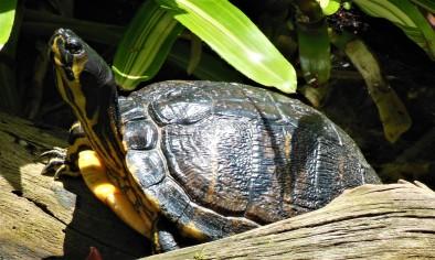 2017.05.14 Butterfly Rainforest Turtle Butterfly Shadow
