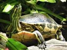 2017.05.27 Butterfly Rainforest Turtle