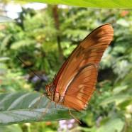 2017.06.03 Butterfly Rainforest Butterfly 6