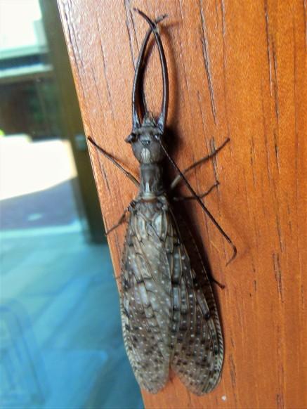 2017.06.25.Monticello Bug on the Door