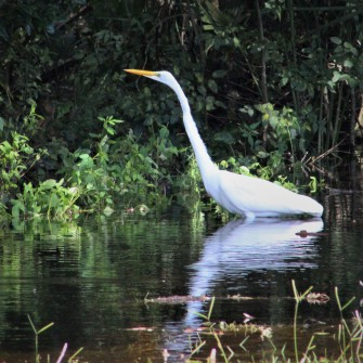 2017.09.12 Earl Powers Park Egret 1