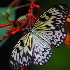 2017.09.16 Butterfly Rainforest Butterfly 1