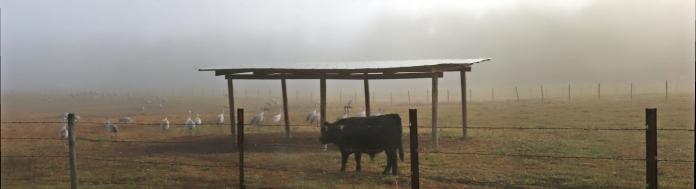 2017.12.23 Beef Teaching Unit Sandhill Crane 4b