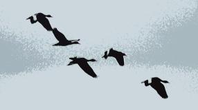 2018.04.18.Sweetwater Wetlands Black-bellied Whistling Ducks 1.art