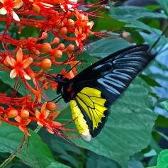 2016.06.21 Butterfly Rainforest Butterfly Art
