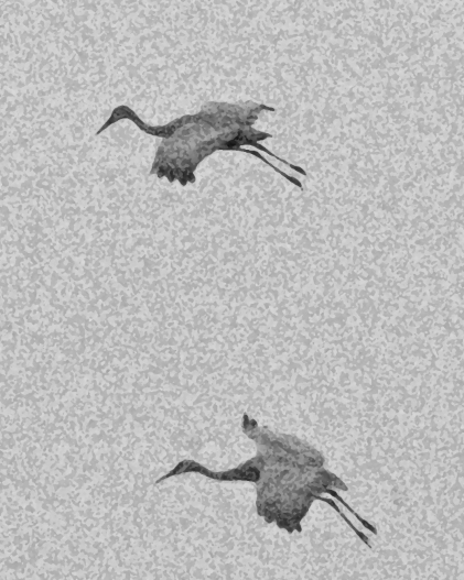 2017.12.28 Beef Teaching Unit Sandhill Crane 1 art