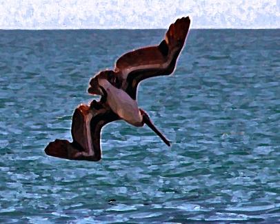 2018.06.05 Anastasia State Park Pelican 3.art