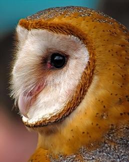 2019.02.16 Pints and Predators Barn Owl 12