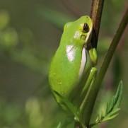 2017.09.13 Boulware Springs Gainesville-Hawthorne Trail Entrance Frog 3
