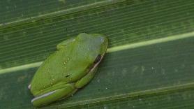 2017.11.11 Payne's Prairie Frog 1