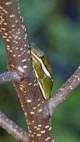 2017.11.24 La Chua Trail Frog 3