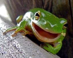Frog (4)