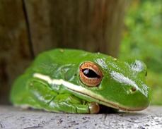 Frog (6)