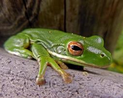 Frog (7)